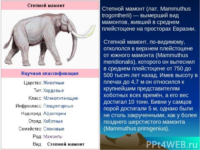 Степной мамонт (лат. Mammuthus trogontherii) — вымерший вид мамонтов, живший в среднем плейстоцене на просторах Евразии. Степной мамонт, по-видимому, откололся в верхнем плейстоцене от южного мамонта (Mammuthus meridionalis), которого он вытеснил в …