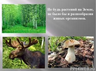 Не будь растений на Земле, не было бы и разнообразия живых организмов.