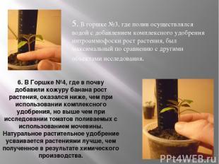 6. В Горшке №4, где в почву добавили кожуру банана рост растения, оказался ниже,