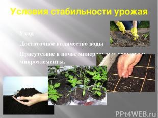 Условия стабильности урожая Уход Достаточное количество воды Присутствие в почве