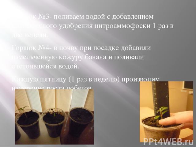 Горшок №3- поливаем водой с добавлением комплексного удобрения нитроаммофоски 1 раз в две недели. Горшок №4- в почву при посадке добавили измельченную кожуру банана и поливали отстоявшейся водой. Каждую пятницу (1 раз в неделю) производим измерение …