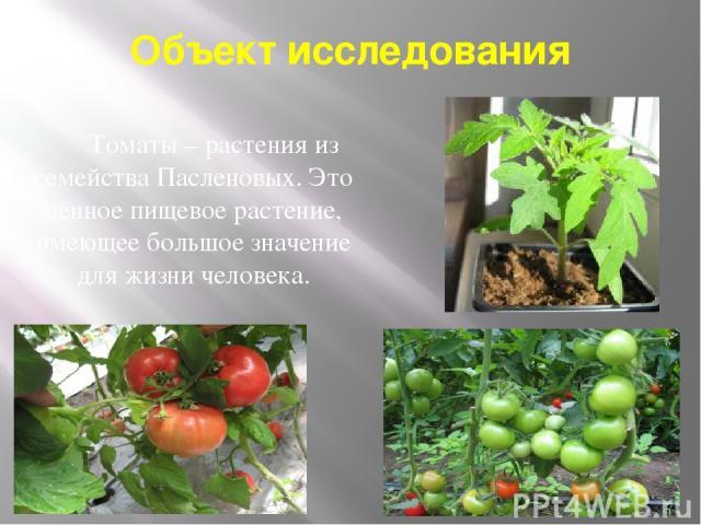 Объект исследования Томаты – растения из семейства Пасленовых. Это ценное пищевое растение, имеющее большое значение для жизни человека.