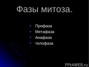 Фазы митоза. Профаза Метафаза Анафаза телофаза