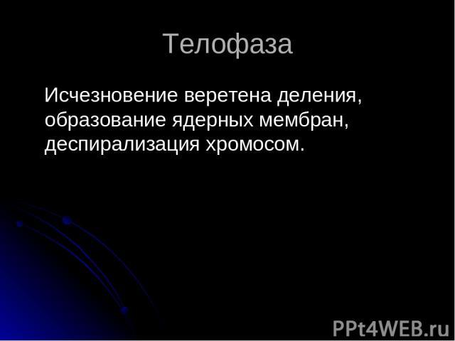 Телофаза Исчезновение веретена деления, образование ядерных мембран, деспирализация хромосом.