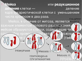 Мейоз илиредукционное делениеклетки— деление ядраэукариотическойклеткис ум