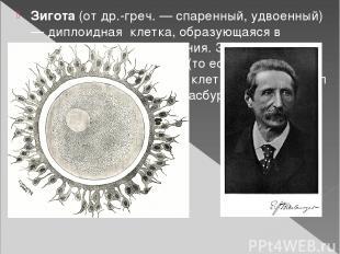 Зигота(отдр.-греч. — спаренный, удвоенный) —диплоидная клетка, образующаяся
