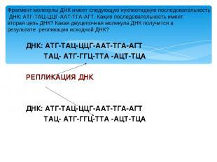 ДНК: АТГ-ТАЦ-ЦЦГ-ААТ-ТГА-АГТ ТАЦ- АТГ-ГГЦ-ТТА -АЦТ-ТЦА РЕПЛИКАЦИЯ ДНК ДНК: АТГ-Т