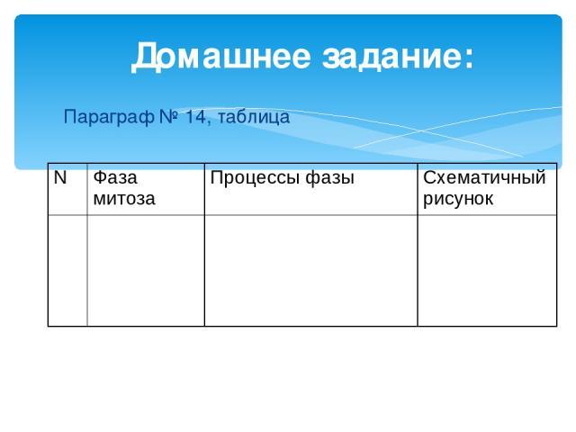 Домашнее задание: Параграф № 14, таблица N Фаза митоза Процессы фазы Схематичный рисунок