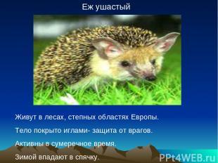 Еж ушастый Живут в лесах, степных областях Европы. Тело покрыто иглами- защита о