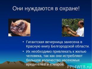 Они нуждаются в охране! Гигантская вечерница занесена в Красную книгу Белгородск