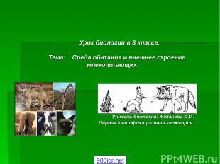 Урок биологии в 8 классе. Тема: Среда обитания и внешнее строение млекопитающих.