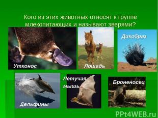 Кого из этих животных относят к группе млекопитающих и называют зверями? Утконос