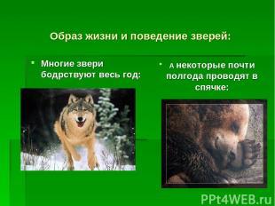 Образ жизни и поведение зверей: Многие звери бодрствуют весь год: А некоторые по