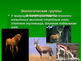 Экологические группы млекопитающих: У живущих на открытой местности копытных выс