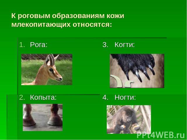 К роговым образованиям кожи млекопитающих относятся: Рога: Копыта: 3. Когти: 4. Ногти:
