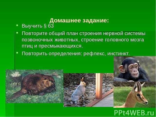 Домашнее задание: Выучить § 63 Повторите общий план строения нервной системы позвоночных животных, строение головного мозга птиц и пресмыкающихся. Повторить определения: рефлекс, инстинкт.