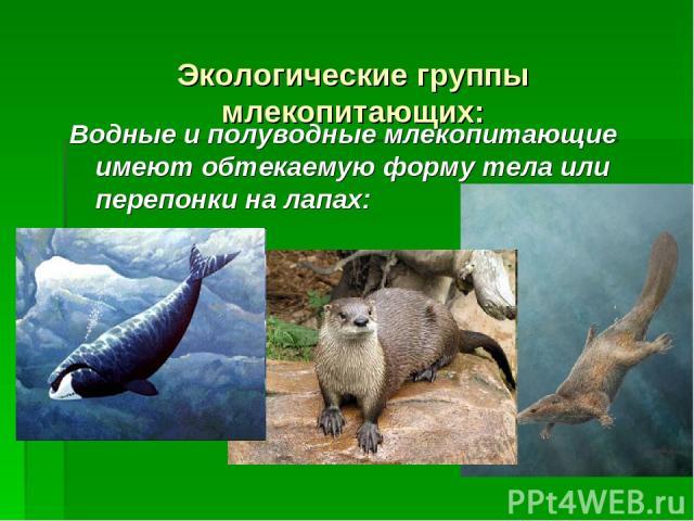 Экологические группы млекопитающих: Водные и полуводные млекопитающие имеют обтекаемую форму тела или перепонки на лапах: