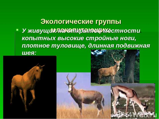 Экологические группы млекопитающих: У живущих на открытой местности копытных высокие стройные ноги, плотное туловище, длинная подвижная шея: