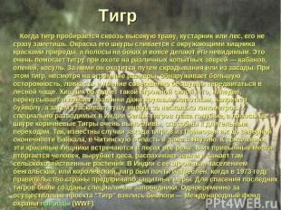 Тигр Когда тигр пробирается сквозь высокую траву, кустарник или лес, его не сраз