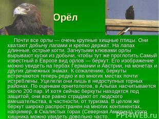 Орёл Почти все орлы — очень крупные хищные птицы. Они хватают добычу лапами и кр