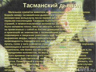Тасманский дьявол Маленькое сумчатое животное несправедливо прозвали дьяволом. Б
