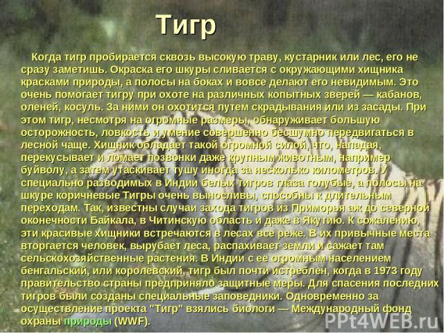 Тигр Когда тигр пробирается сквозь высокую траву, кустарник или лес, его не сразу заметишь. Окраска его шкуры сливается с окружающими хищника красками природы, а полосы на боках и вовсе делают его невидимым. Это очень помогает тигру при охоте на раз…