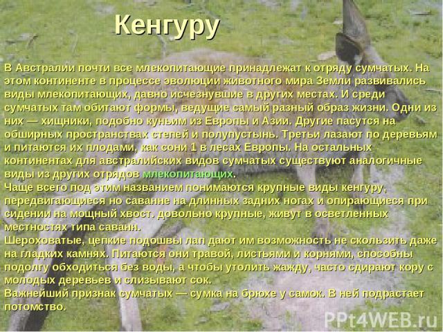 Кенгуру В Австралии почти все млекопитающие принадлежат к отряду сумчатых. На этом континенте в процессе эволюции животного мира Земли развивались виды млекопитающих, давно исчезнувшие в других местах. И среди сумчатых там обитают формы, ведущие сам…