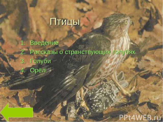 Птицы Введение Рассказы о странствующих голубях Голуби Орёл