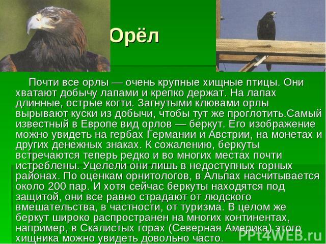 Орёл Почти все орлы — очень крупные хищные птицы. Они хватают добычу лапами и крепко держат. На лапах длинные, острые когти. Загнутыми клювами орлы вырывают куски из добычи, чтобы тут же проглотить.Самый известный в Европе вид орлов — беркут. Его из…