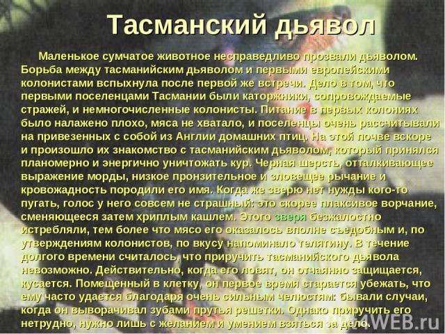 Тасманский дьявол Маленькое сумчатое животное несправедливо прозвали дьяволом. Борьба между тасманийским дьяволом и первыми европейскими колонистами вспыхнула после первой же встречи. Дело в том, что первыми поселенцами Тасмании были каторжники, соп…
