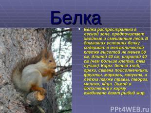 Белка Белка распространена в лесной зоне, предпочитает хвойные и смешанные леса.