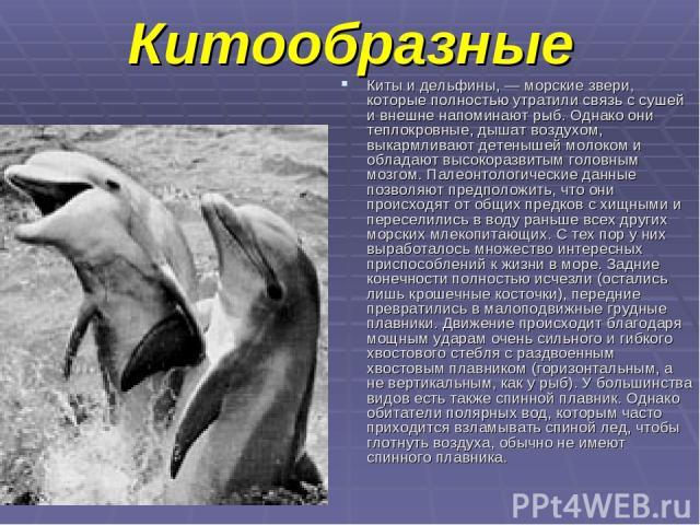 Китообразные Киты и дельфины, — морские звери, которые полностью утратили связь с сушей и внешне напоминают рыб. Однако они теплокровные, дышат воздухом, выкармливают детенышей молоком и обладают высокоразвитым головным мозгом. Палеонтологические да…