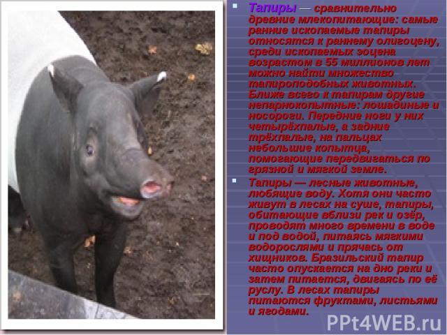 Тапиры — сравнительно древние млекопитающие: самые ранние ископаемые тапиры относятся к раннему олигоцену, среди ископаемых эоцена возрастом в 55 миллионов лет можно найти множество тапироподобных животных. Ближе всего к тапирам другие непарнокопытн…