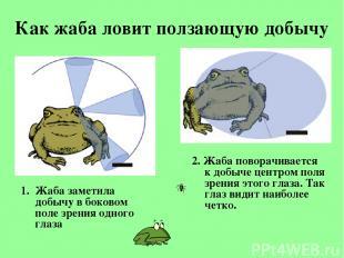 Как жаба ловит ползающую добычу Жаба заметила добычу вбоковом поле зрения одног