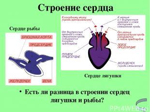 Есть ли разница в строении сердец лягушки и рыбы? Строение сердца Сердце рыбы Се