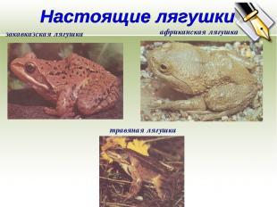 закавказская лягушка африканская лягушка травяная лягушка