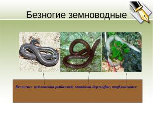Безногие земноводные Безногие: цейлонский рыбозмей, западный дермофис, тифлонект