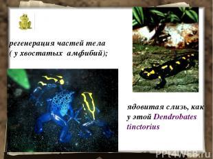 регенерация частей тела ( у хвостатых амфибий); ядовитая слизь, как у этой Dendr