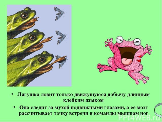 Лягушка ловит только движущуюся добычу длинным клейким языком Она следит за мухой подвижными глазами, аее мозг рассчитывает точку встречи и команды мышцам ног