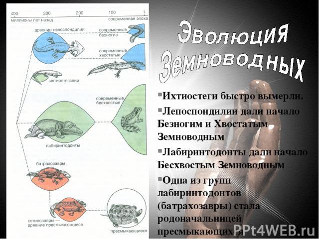 Ихтиостеги быстро вымерли. Лепоспондилии дали начало Безногим и Хвостатым Земноводным Лабиринтодонты дали начало Бесхвостым Земноводным Одна из групп лабиринтодонтов (батрахозавры) стала родоначальницей пресмыкающихся