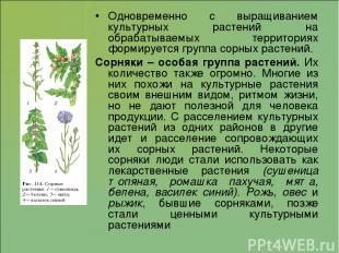 Одновременно с выращиванием культурных растений на обрабатываемых территориях фо
