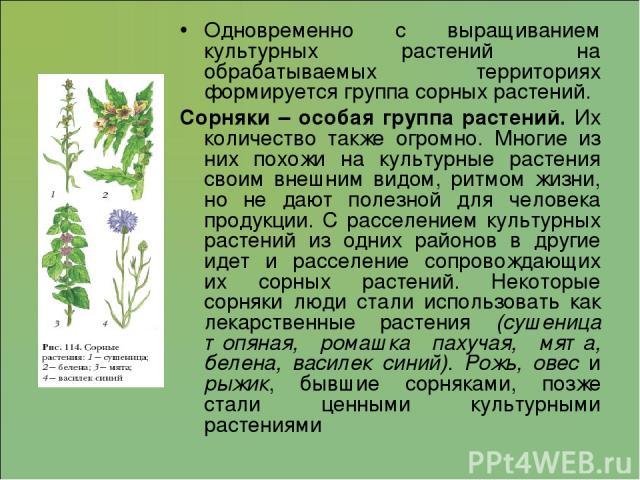 Одновременно с выращиванием культурных растений на обрабатываемых территориях формируется группа сорных растений. Сорняки – особая группа растений. Их количество также огромно. Многие из них похожи на культурные растения своим внешним видом, ритмом …