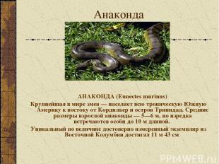 Анаконда АНАКОНДА (Eunectes murinus) Крупнейшая в мире змея — населяет всю тропи
