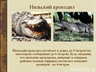 Нильский крокодил Нильский крокодил достигает в длину до 5 метров (по некоторым