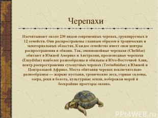 Черепахи Насчитывают около 230 видов современных черепах, группируемых в 12 семе