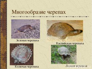 Многообразие черепах Зеленая черепаха Каспийская черепаха Колючая черепаха Лесна