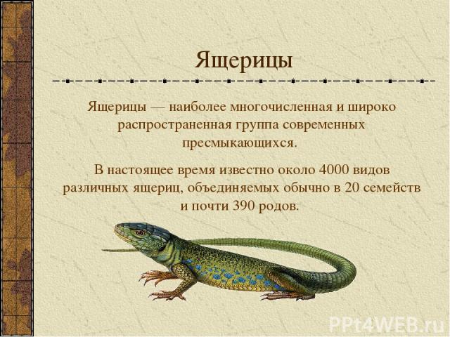 Ящерицы Ящерицы — наиболее многочисленная и широко распространенная группа современных пресмыкающихся. В настоящее время известно около 4000 видов различных ящериц, объединяемых обычно в 20 семейств и почти 390 родов.
