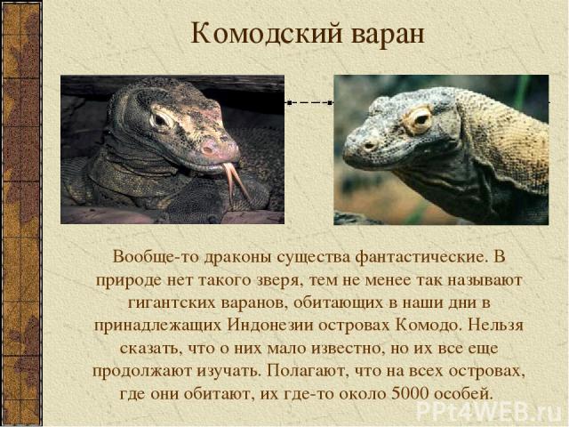 Комодский варан Вообще-то драконы существа фантастические. В природе нет такого зверя, тем не менее так называют гигантских варанов, обитающих в наши дни в принадлежащих Индонезии островах Комодо. Нельзя сказать, что о них мало известно, но их все е…