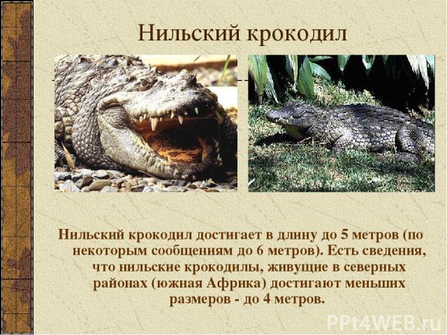 Нильский крокодил Нильский крокодил достигает в длину до 5 метров (по некоторым сообщениям до 6 метров). Есть сведения, что нильские крокодилы, живущие в северных районах (южная Африка) достигают меньших размеров - до 4 метров.