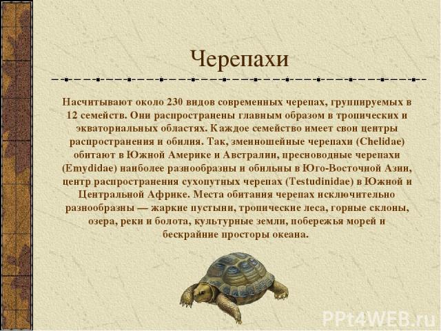 Черепахи Насчитывают около 230 видов современных черепах, группируемых в 12 семейств. Они распространены главным образом в тропических и экваториальных областях. Каждое семейство имеет свои центры распространения и обилия. Так, змеиношейные черепахи…